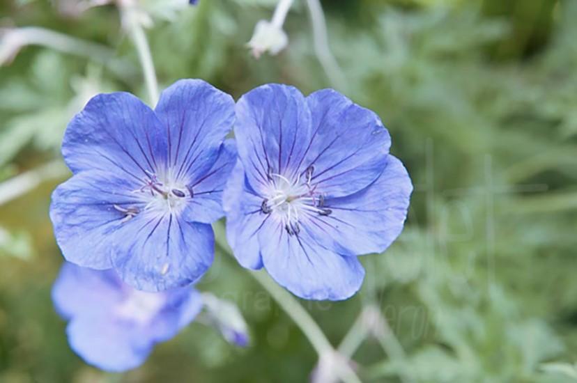 fleurs-01