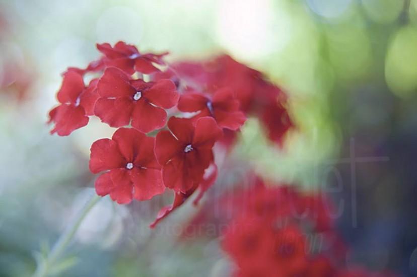 fleurs-04