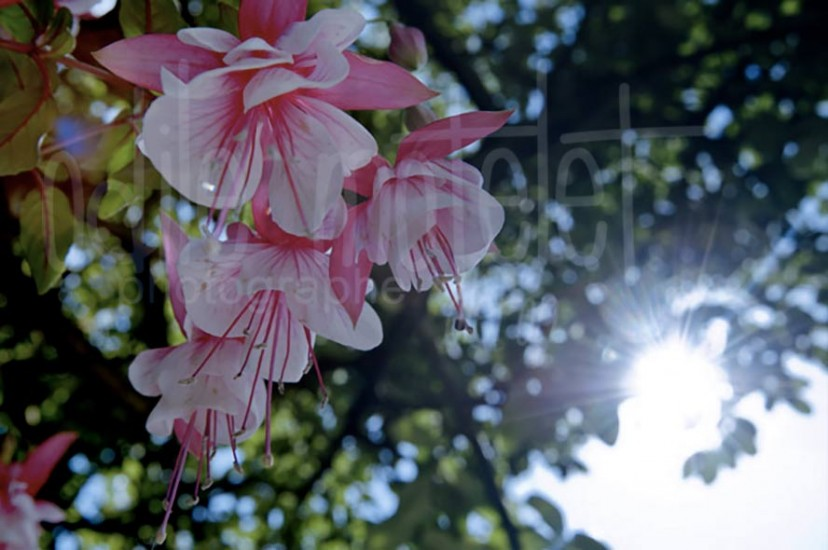 fleurs-06