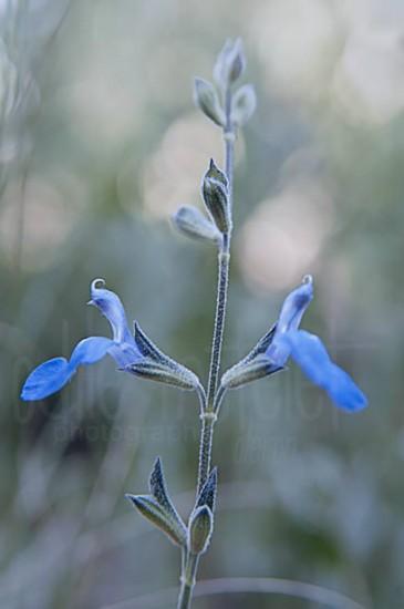 fleurs-11
