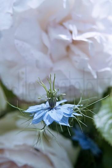fleurs-27
