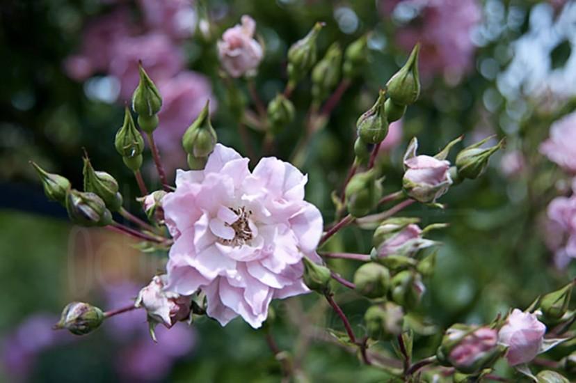 fleurs-31
