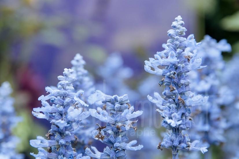 fleurs-38