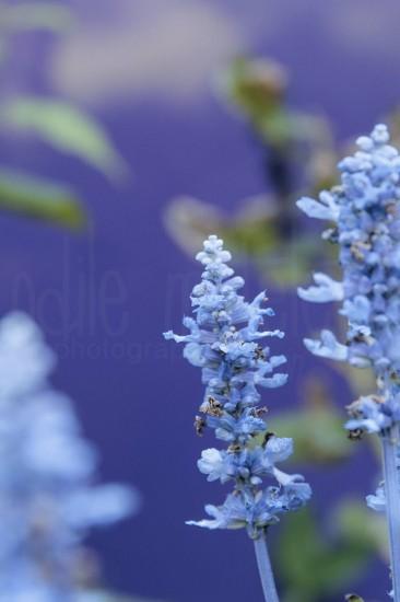 fleurs-39