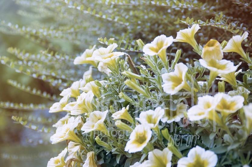 fleurs-43