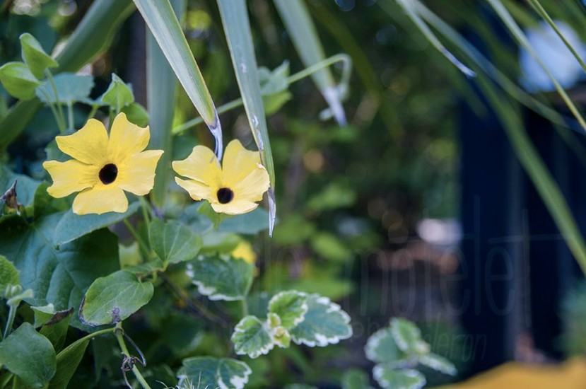fleurs-45