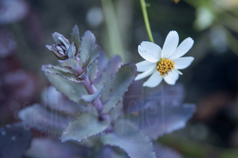 fleurs-53