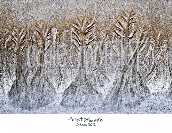 foret-primaire