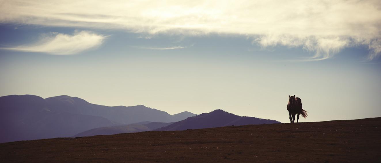 pyrenees01